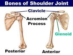 Acromion Process